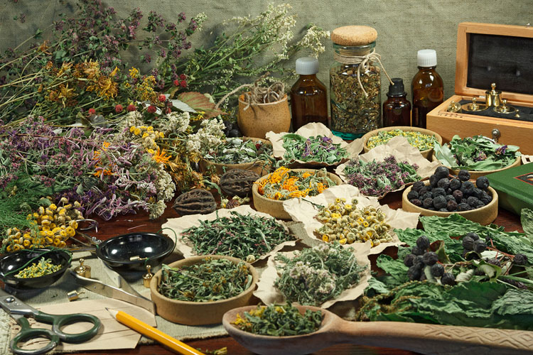 Herbs A Spiritual Approach University Of Metaphysical